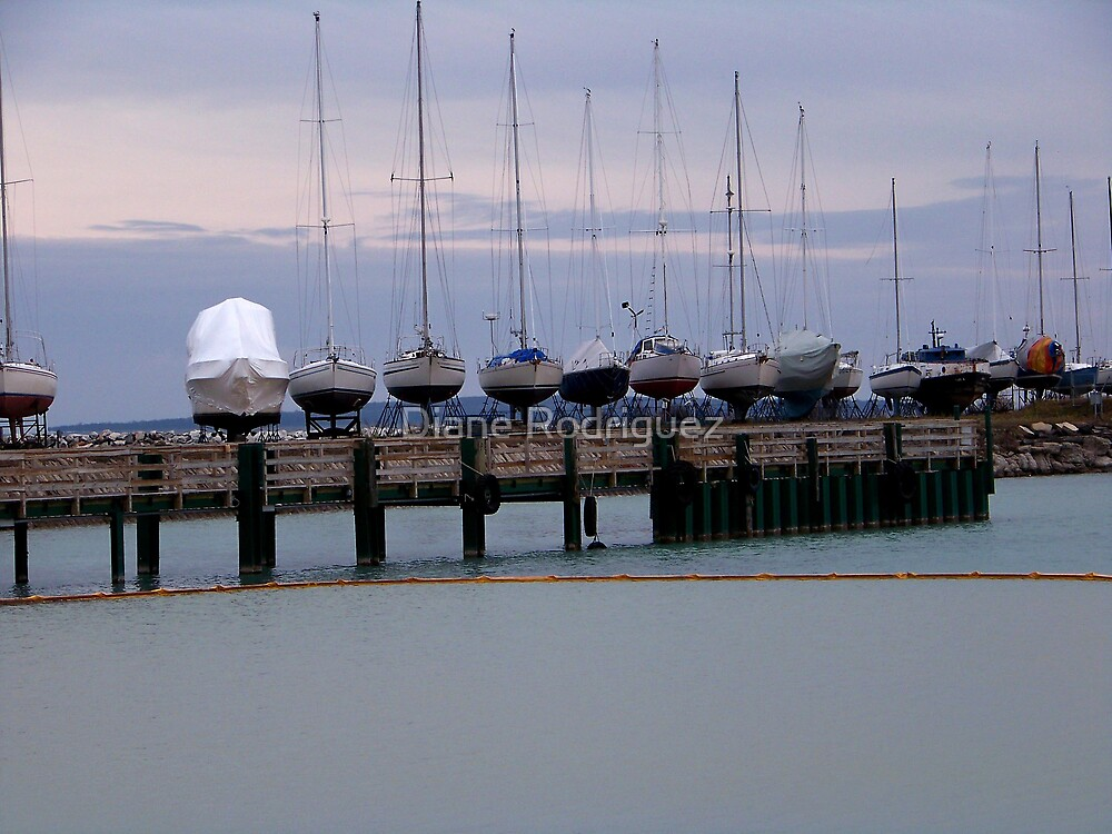 Sails set for Winter by Diane Rodriguez