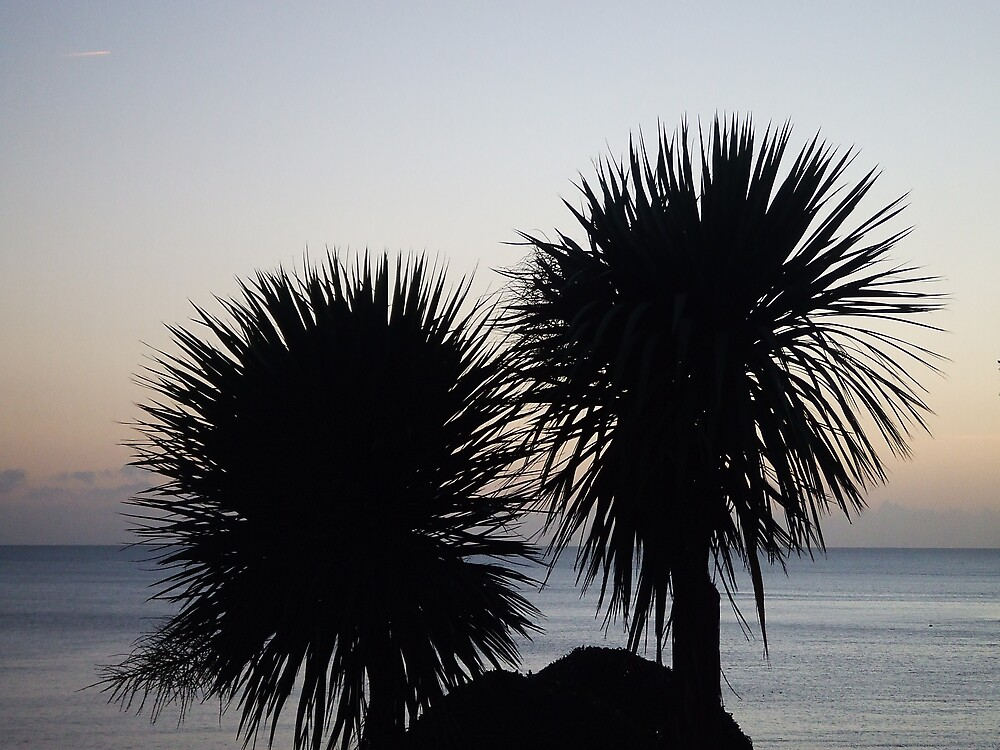 Palm silhouette. by Dean Taylor