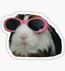 Guinea Pig in Sunglasses Sticker