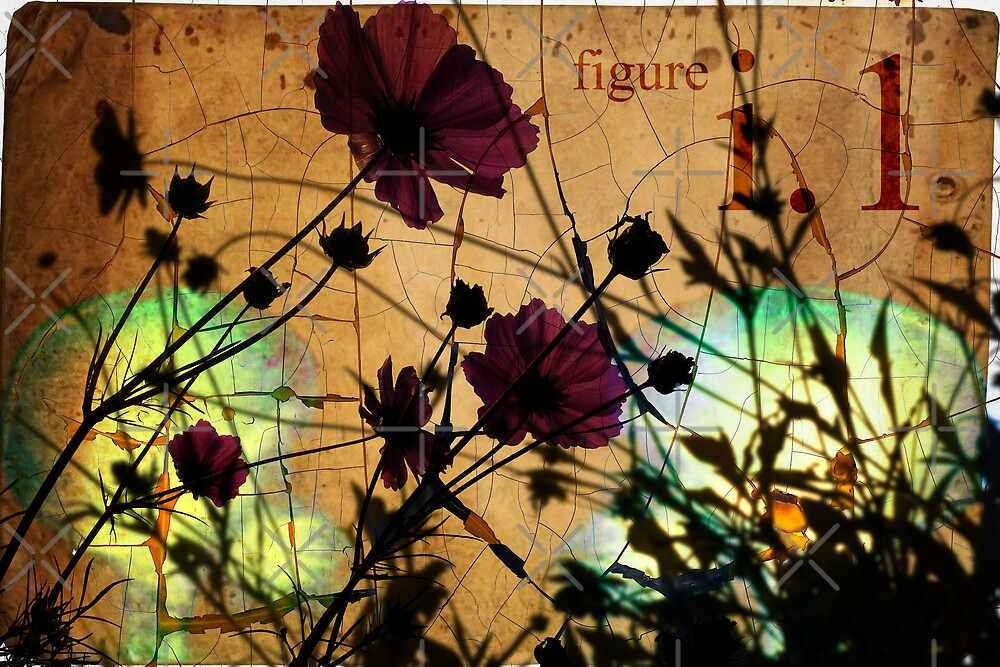 Uno by Angie Seiffert