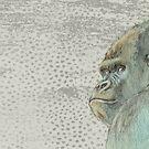 «Gorila» de Val Garcia Duran