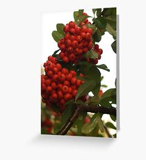 Pyracantha Stem with Droplets Greeting Card