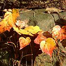 small Autumn ivy on the stone by dorka31