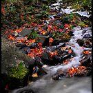 Northwest stream by Christopher Barker