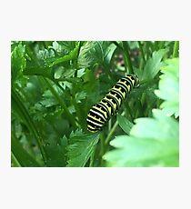 Colorful caterpillar Photographic Print