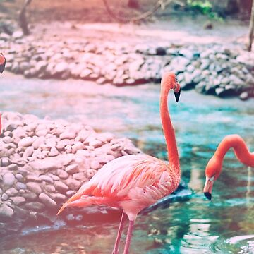 Exotic flamingos by IndeaVanmerllin