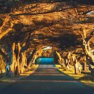James Street Tree Tunnel 2 by hangingpixels