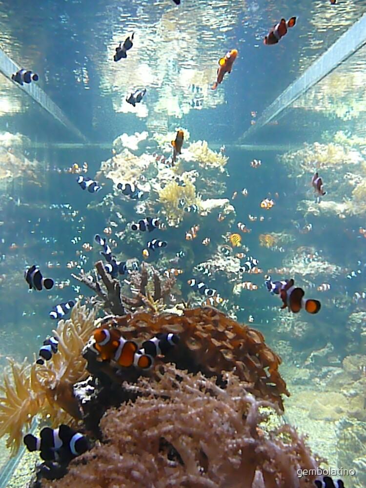 Nemo by gembolatino