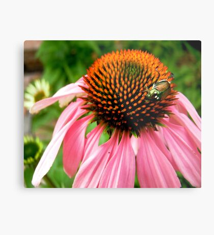Pink flower with a visitor Metal Print