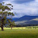 country landscape by Joel McDonald