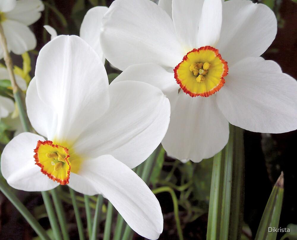 The daffodi by Dikrista