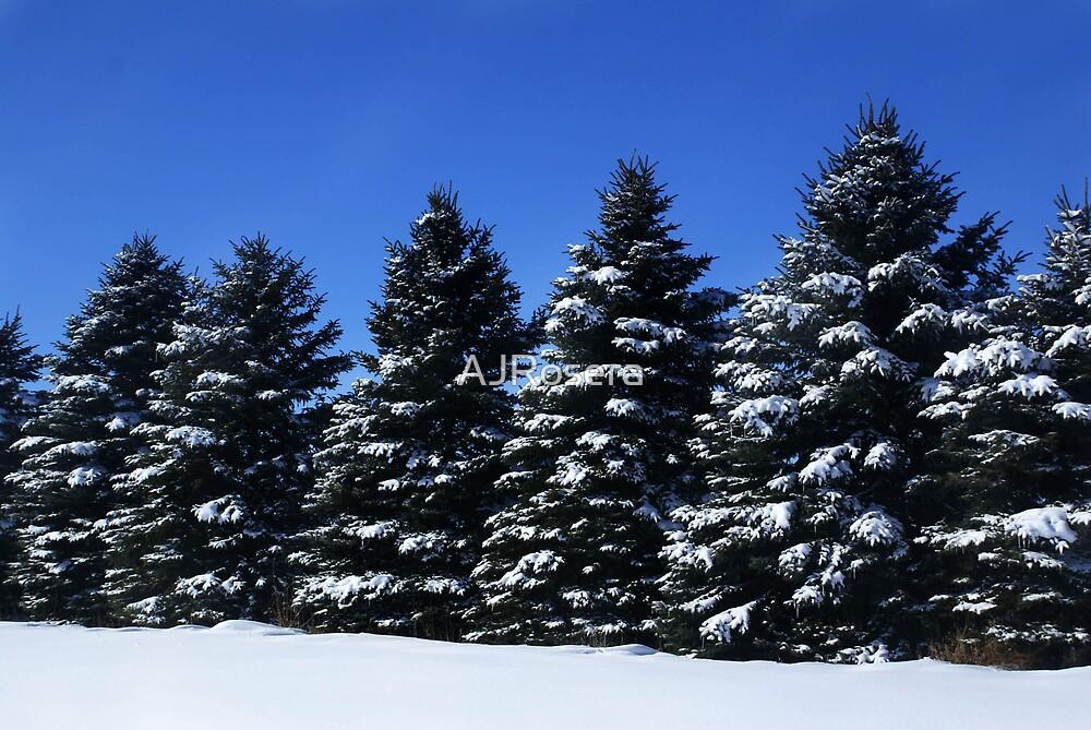 Winter Bliss by AJRosera