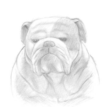 Grumpy Ol' Bulldog by sketchbooksage