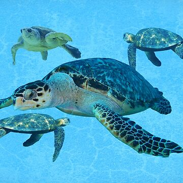Turtle by JohnDSmith