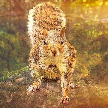 Squirrel hopes by hayleyrphoto