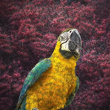 Macaw's delight by hayleyrphoto