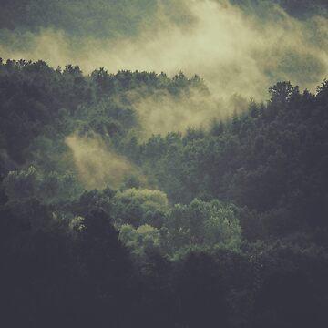 Forest by Xymota