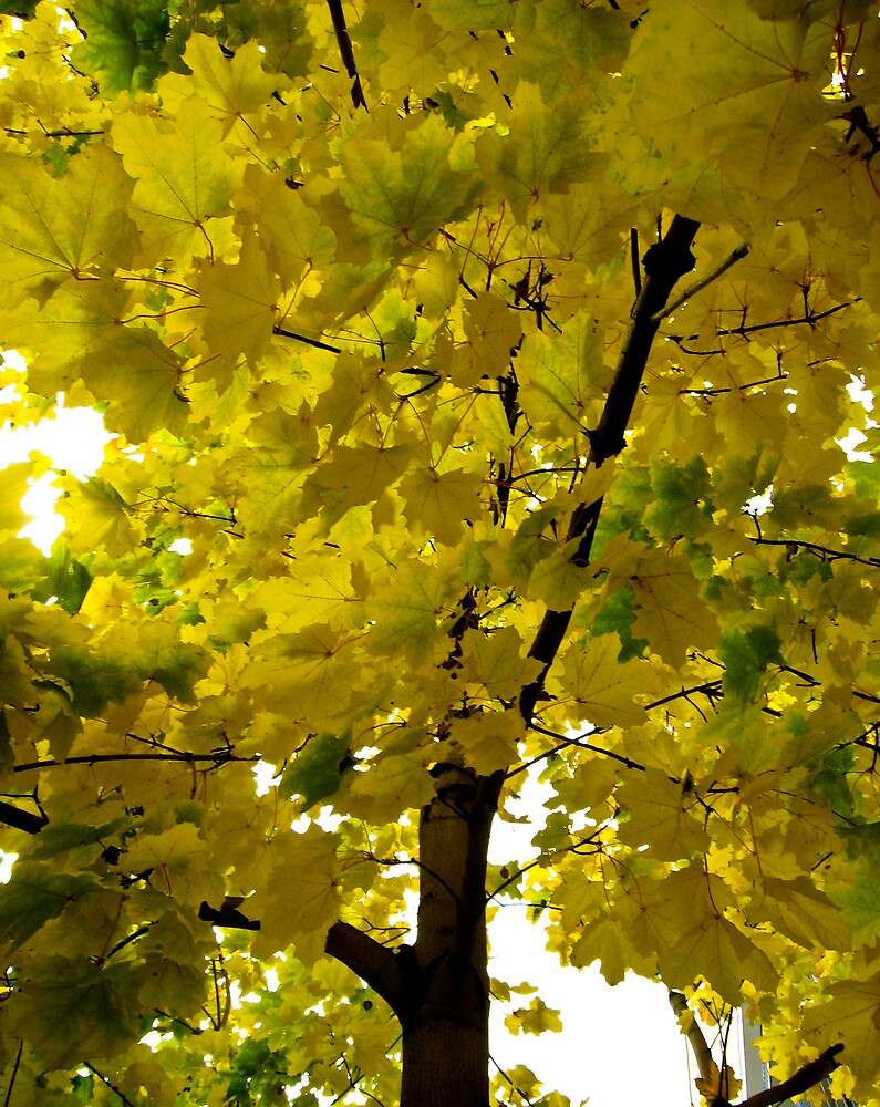 Fall Into Yellow! by JaneTara Oliver