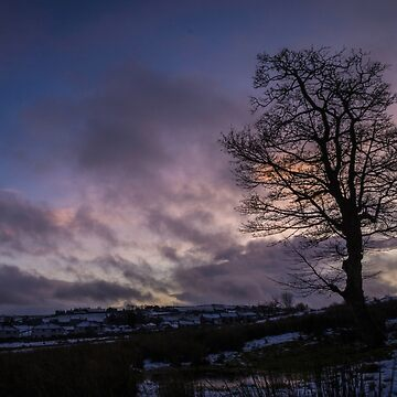 Sunset Sycamore by AndyBeattie