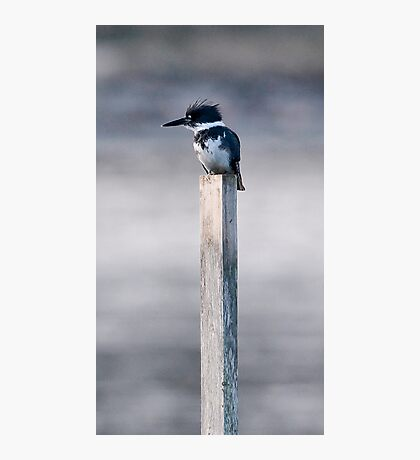 Cheeky Photographic Print