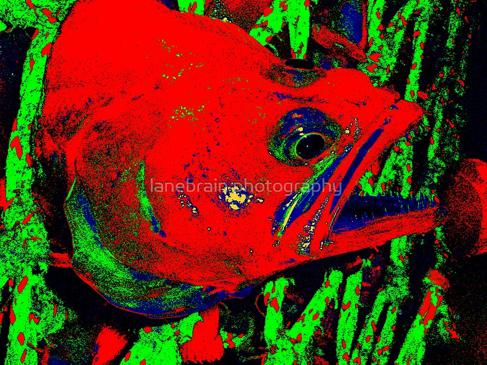 Vicious Fishes by lanebrain photography
