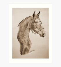 """Argentinian Beauty"" - Criollo mare - Sepia Art Print"