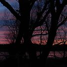 Colorful Sunset Behind The Trees by silverdragon