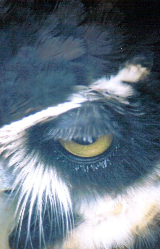 owl eye by Emma Dixon