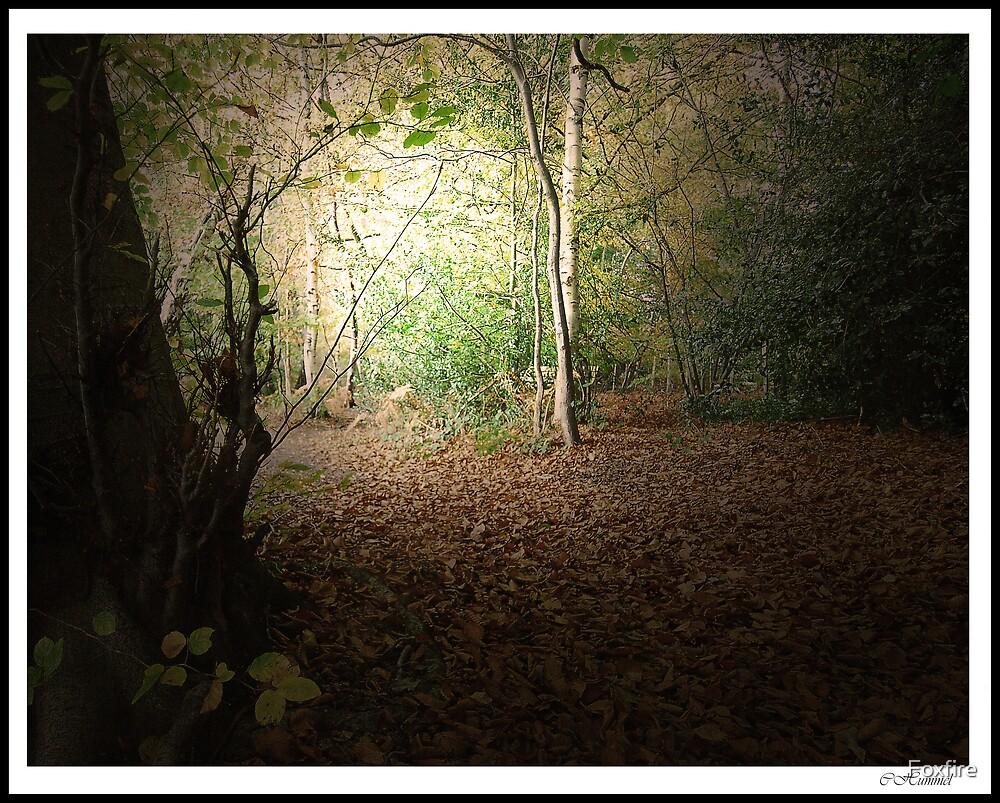 Autumn Walk 2nd Edition - near Slaugham, Sussex by ©FoxfireGallery / FloorOne Photography