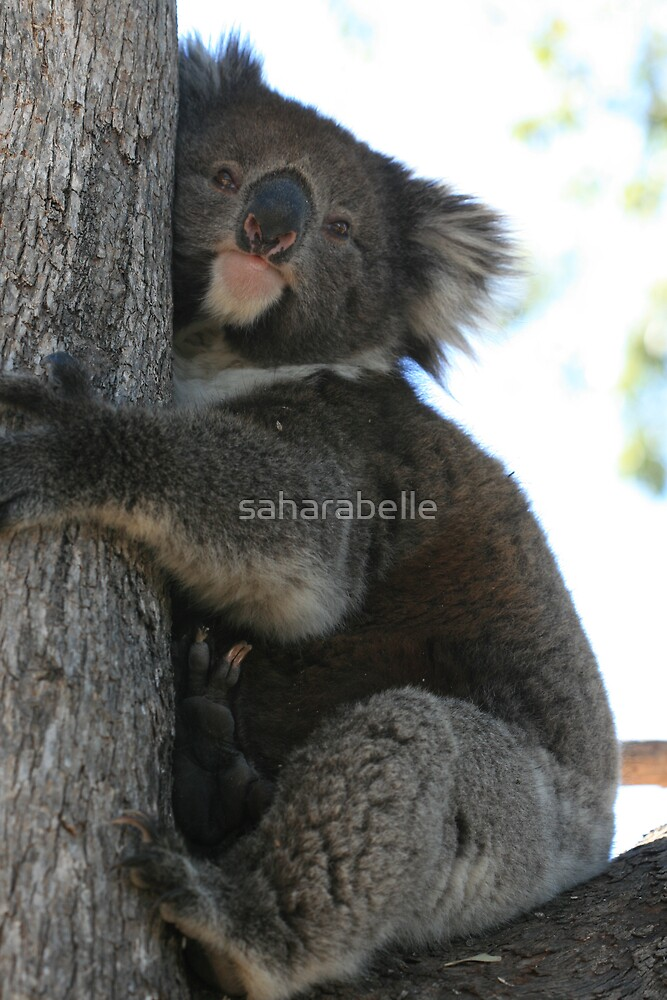 Tree Hugger by saharabelle