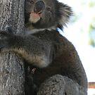 Tree Hugger by saharabelle