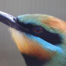Rainbow Bee-Eater by Steve Bullock