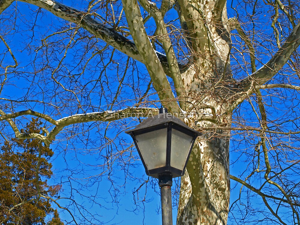 THE PARK LAMP by Sharon A. Henson