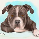 Big Tough Brown Pit Bull Lying Down and Looking at You by ibadishi