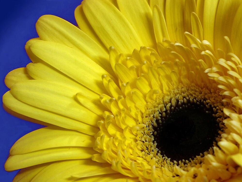 Flower by Shobingeorge