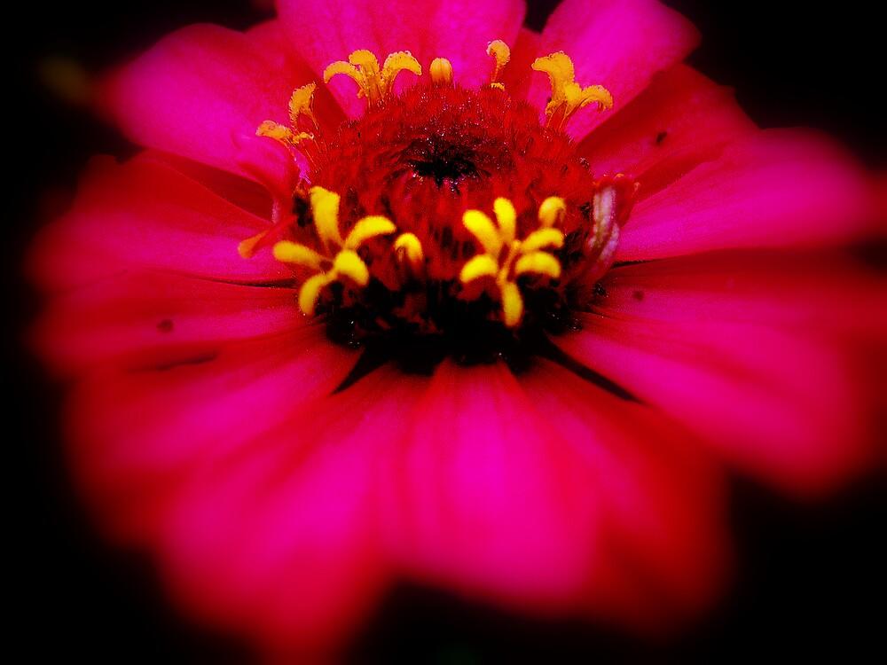 Pink Blur by DottieDees