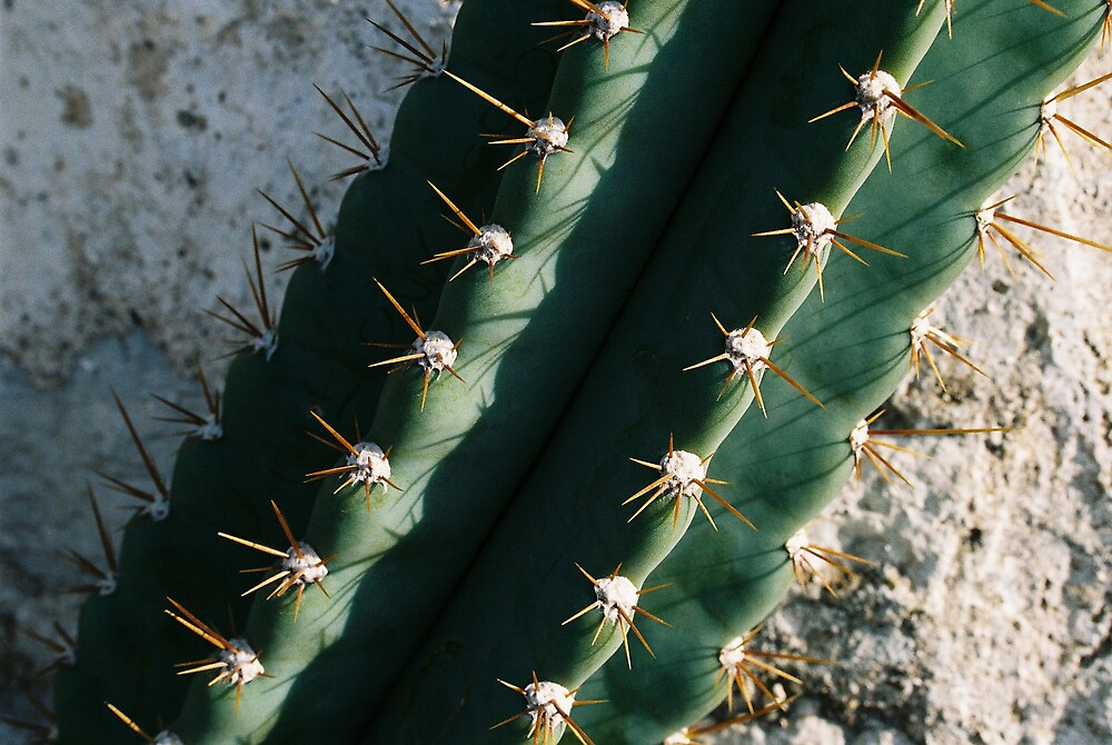Cactus by Miko Coffey