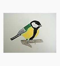 Great Tit Coloured Pencil Drawing Photographic Print