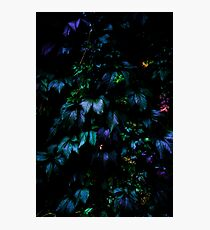 Welcome to the Jungle Photographic Print