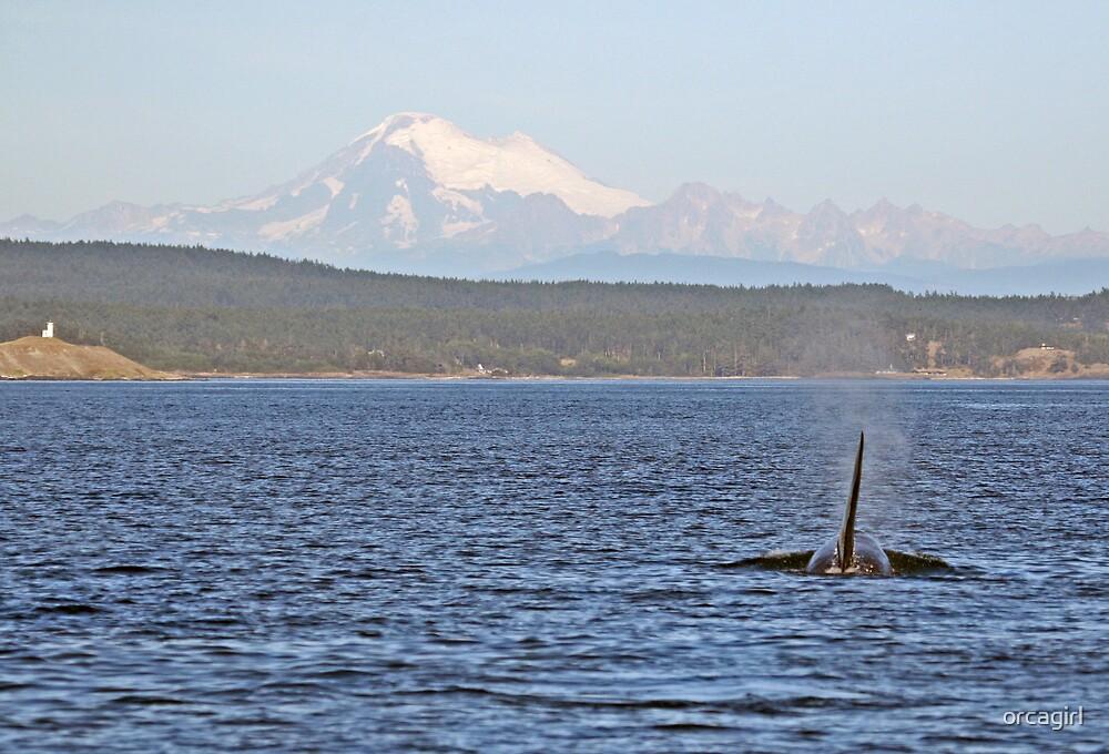 Orca & Baker by orcagirl