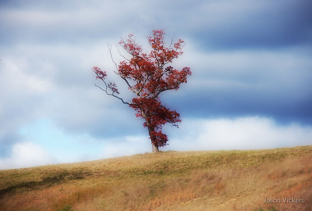 Lonely tree by Jason Vickers