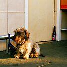 POTOBELLO DOG by Ingrid Rasmussen