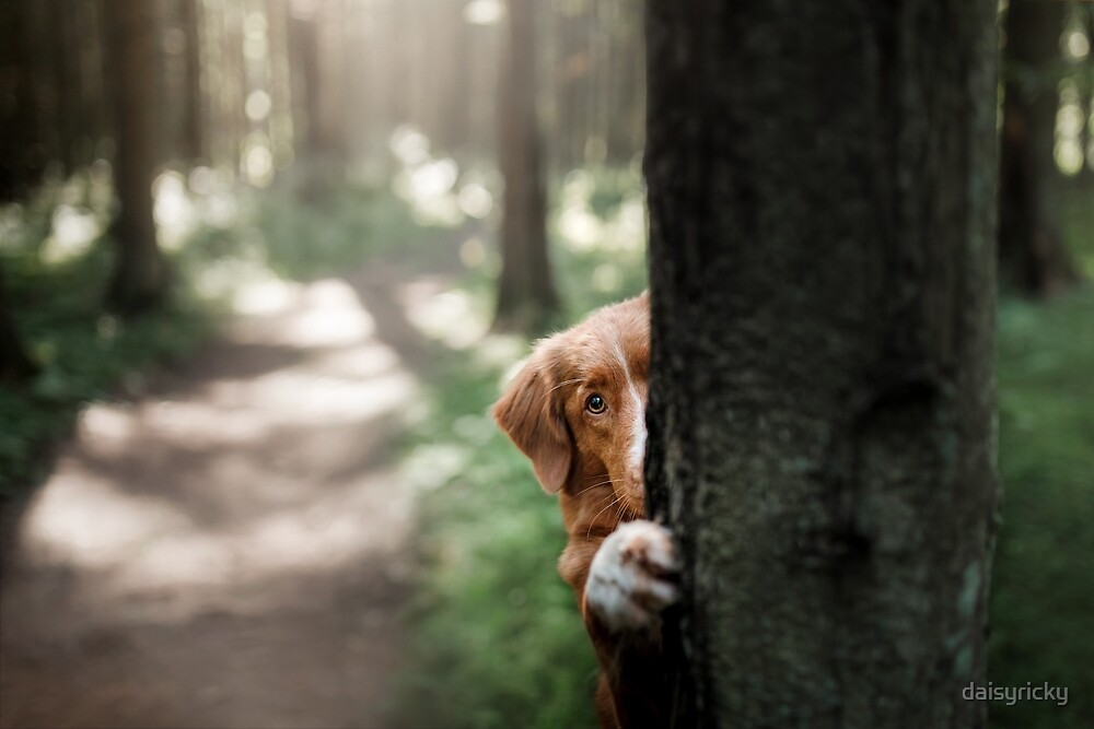 cute dog hiding behind a tree. Travel with a pet by daisyricky
