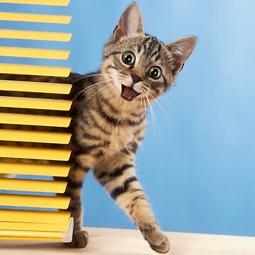 Cute Tabby kitten with a surprised expression by ArdeaOnline