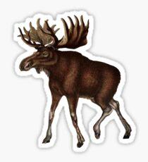 Natural Wonder Sticker