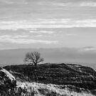 Lone Tree, Malham by Andy Beattie