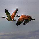 Canada Geese In Flight by Larry Trupp