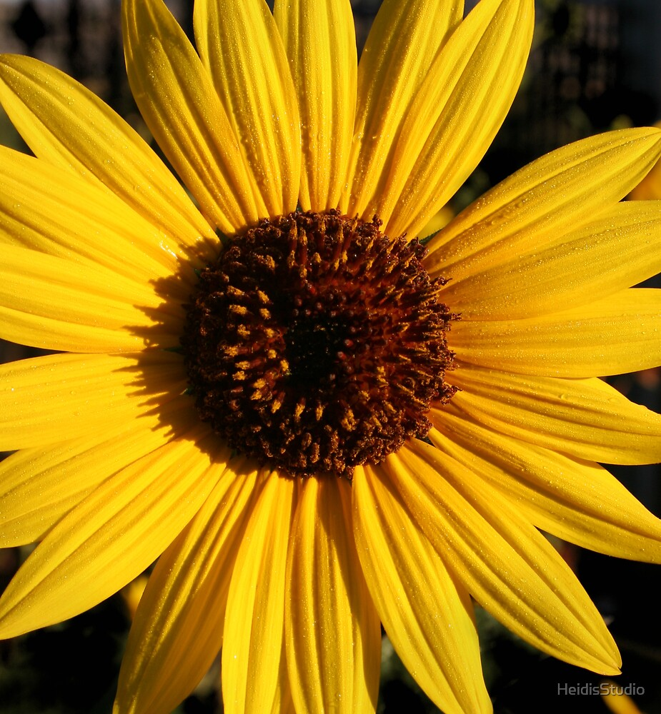 Margie's Sunflower by HeidisStudio