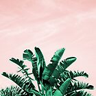 Turquoise Banana Leaves, pink sky   by Anna Lemos
