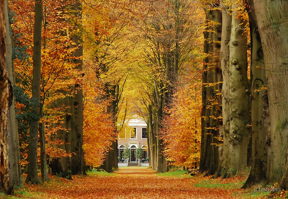 A country-house lane in autumnal splendour by jchanders